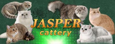 Jasper Cats питомник британских, шотландских, экзотических кошек и персидских шиншилл></a></div>                                            <div class=